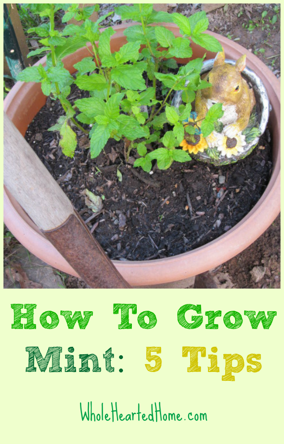How To Grow Mint: 5 Tips