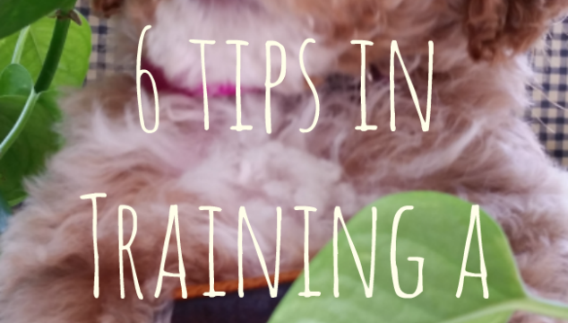6 Tips in Training A Cute Puppy